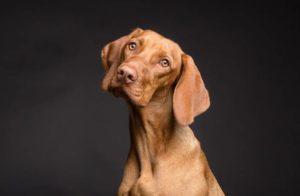 Wszystko co chcielibyście wiedzieć o psach - pokaz naukowy